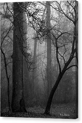 Misty Woods Canvas Print by Rebecca Davis