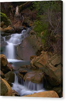 Mix Canyon Creek Canvas Print by Bill Gallagher