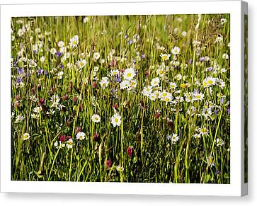 Mixed Flowers Canvas Print by Aged Pixel