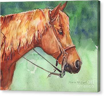 Chestnut Horse Canvas Print - Horse Watercolor Named Mo by Maria's Watercolor