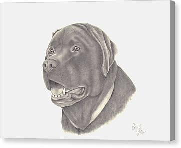 Canvas Print featuring the drawing Mocha by Patricia Hiltz