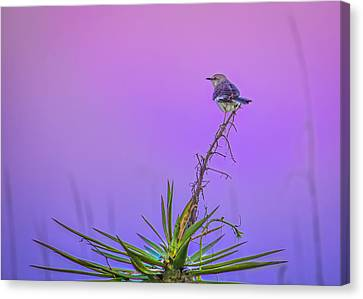 Canvas Print featuring the photograph Mocking The Yucca by Rob Sellers