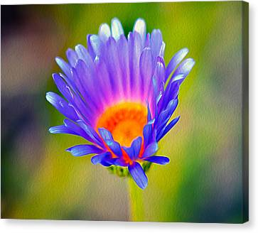 Mojave Aster Canvas Print