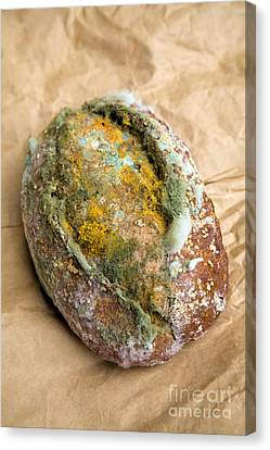 Moldy Bread Roll Canvas Print