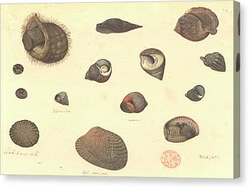Molluscs Canvas Print by Natural History Museum, London