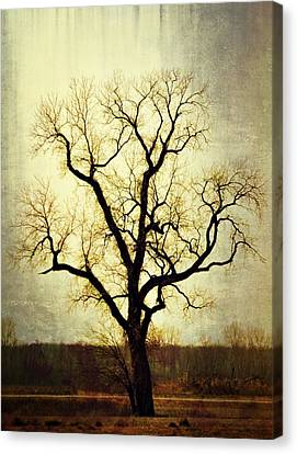 Molted Tree Canvas Print by Marty Koch