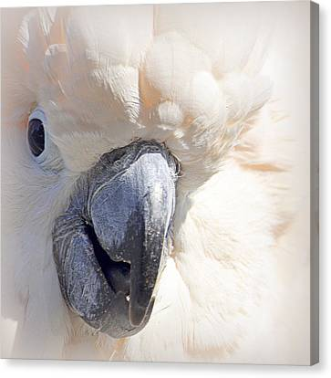 Canvas Print featuring the photograph Moluccan Close Up by AJ  Schibig