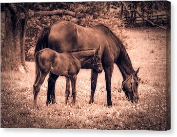 Mom And Foal Canvas Print by Mary Timman