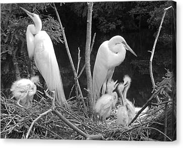 Mom And Pop And Chicks In Black And White Canvas Print by Suzanne Gaff