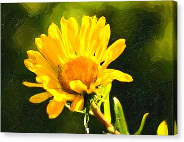Moment In The Sun - Golden Flower - Northern California Canvas Print by Mark E Tisdale
