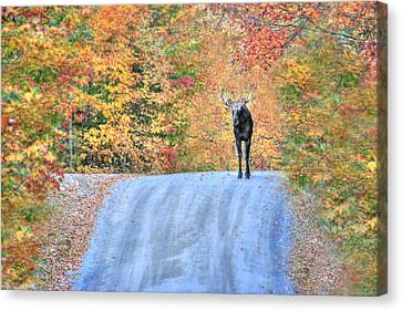 Moments That Take Our Breath Away - No Text Canvas Print by Shelley Neff