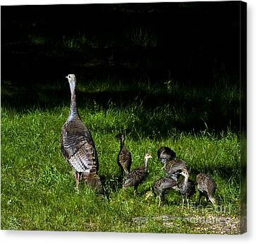 Mom..he Is Looking At Us Again Canvas Print by Timothy J Berndt