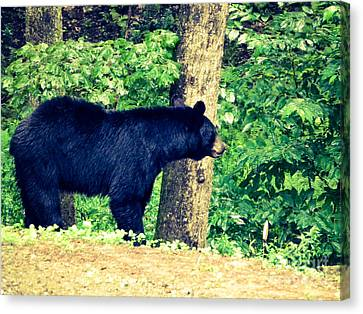 Canvas Print featuring the photograph Momma Bear by Jan Dappen