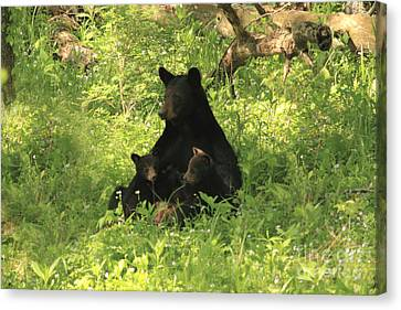 Canvas Print featuring the photograph Mommy And Babies by Geraldine DeBoer
