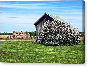Moms Lilac Barn Canvas Print by Cheryl Cencich