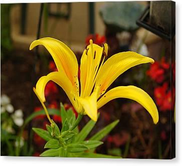Mom's Yellow Flower Canvas Print by B Wayne Mullins