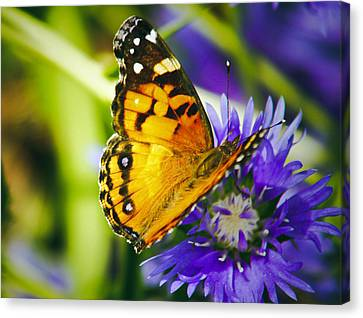 Monarch And Flower Canvas Print