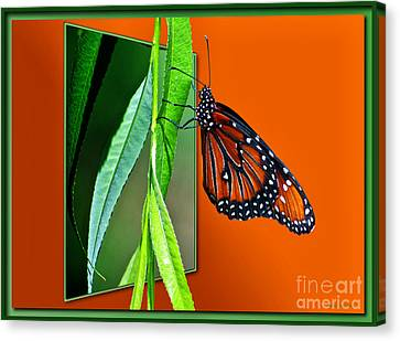 Monarch Butterfly 01 Canvas Print by Thomas Woolworth