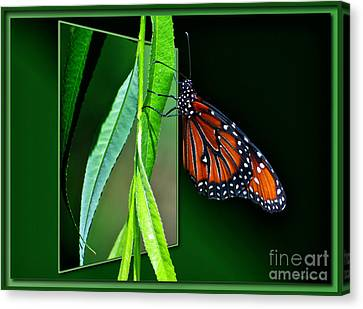 Monarch Butterfly 04 Canvas Print by Thomas Woolworth