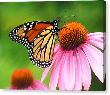 Monarch Butterfly Canvas Print by Christina Rollo