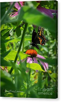 Monarch Butterfly Deep In The Jungle Canvas Print