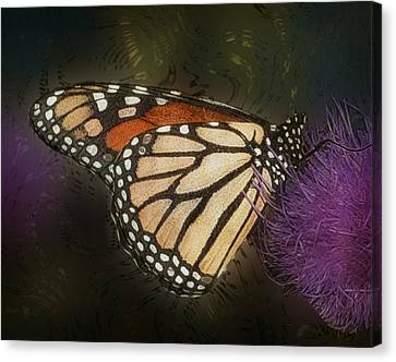 Monarch Butterfly Canvas Print by Jack Zulli