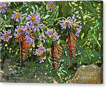 Monarch Butterfly Trio Canvas Print