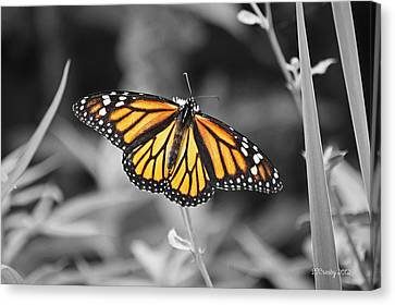 Monarch In Its Glory Canvas Print