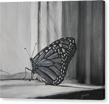 Monarch In The Window Canvas Print