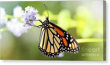 Monarch Iv Canvas Print