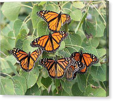 Monarch Migration Canvas Print