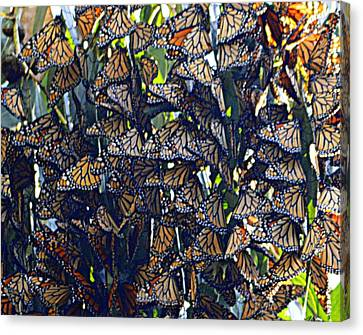 Monarch Mosaic Canvas Print