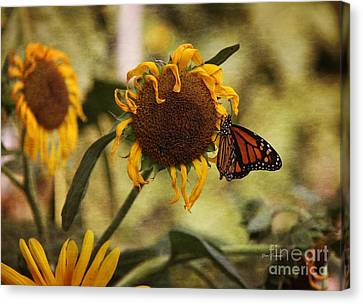 Monarch On The Sunflower Canvas Print by Yumi Johnson