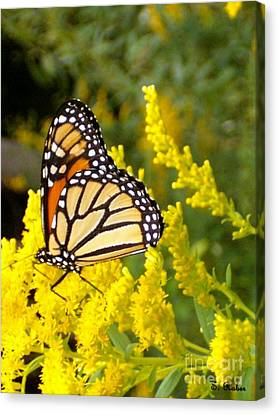 Canvas Print featuring the photograph Monarch by Sara  Raber