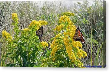 Monarchs On The Beach Canvas Print