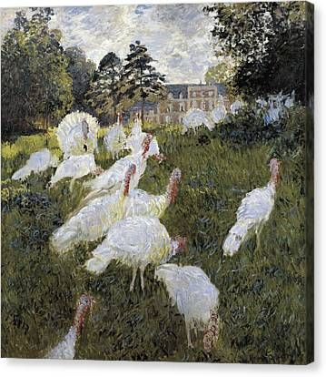 Monet, Claude 1840-1926. The Turkeys Canvas Print by Everett