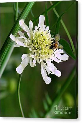 Canvas Print featuring the photograph Monet's Garden Bee. Giverny by Jennie Breeze