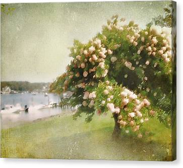 Monet's Tree Canvas Print by Karen Lynch