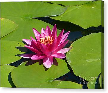 Monet's Waterlily Canvas Print