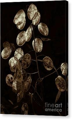 Money Plant Canvas Print by Jeff Breiman