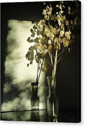 Money Plants Really Do Cast Shadows Canvas Print by Guy Ricketts