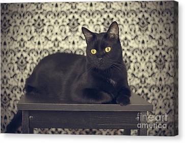 Mongo The Robust Cat Canvas Print by Jennifer Ramirez