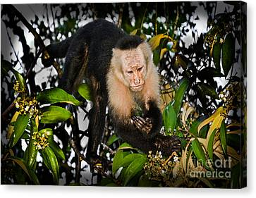 Monkey Business  Canvas Print by Gary Keesler