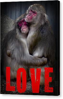 Monkey Love Canvas Print by Daniel Hagerman