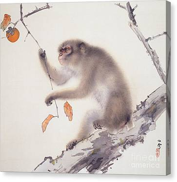 Monkey Canvas Print by Pg Reproductions
