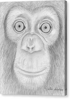 Pencil Canvas Print - Monkey Portrait by M Valeriano