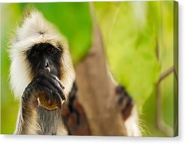 Monkey See Canvas Print by Stefan Carpenter
