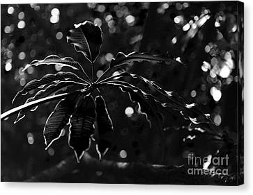 Monochrome Leaf  Canvas Print