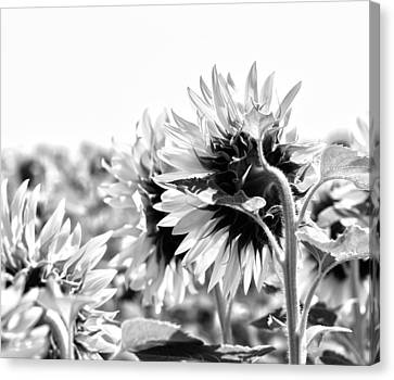 Monochrome Summer Canvas Print by Georgia Fowler