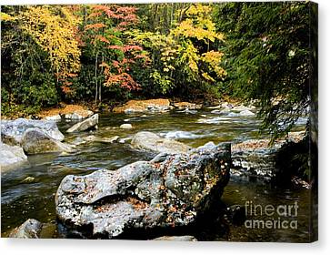 Monongahela National Forest Cranberry River Canvas Print by Thomas R Fletcher